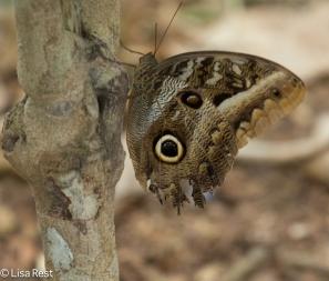 butterfly-07-08-2016-4992