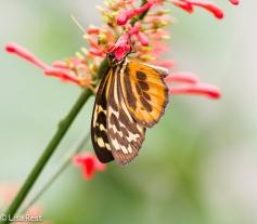 butterfly-07-08-2016-5001