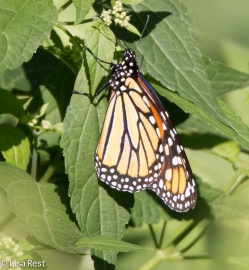 Monarch 09-04-16-0199
