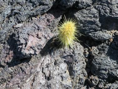 cactus-7-12-2016-0284