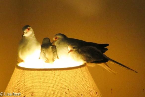 dove-family-11-24-16-0694