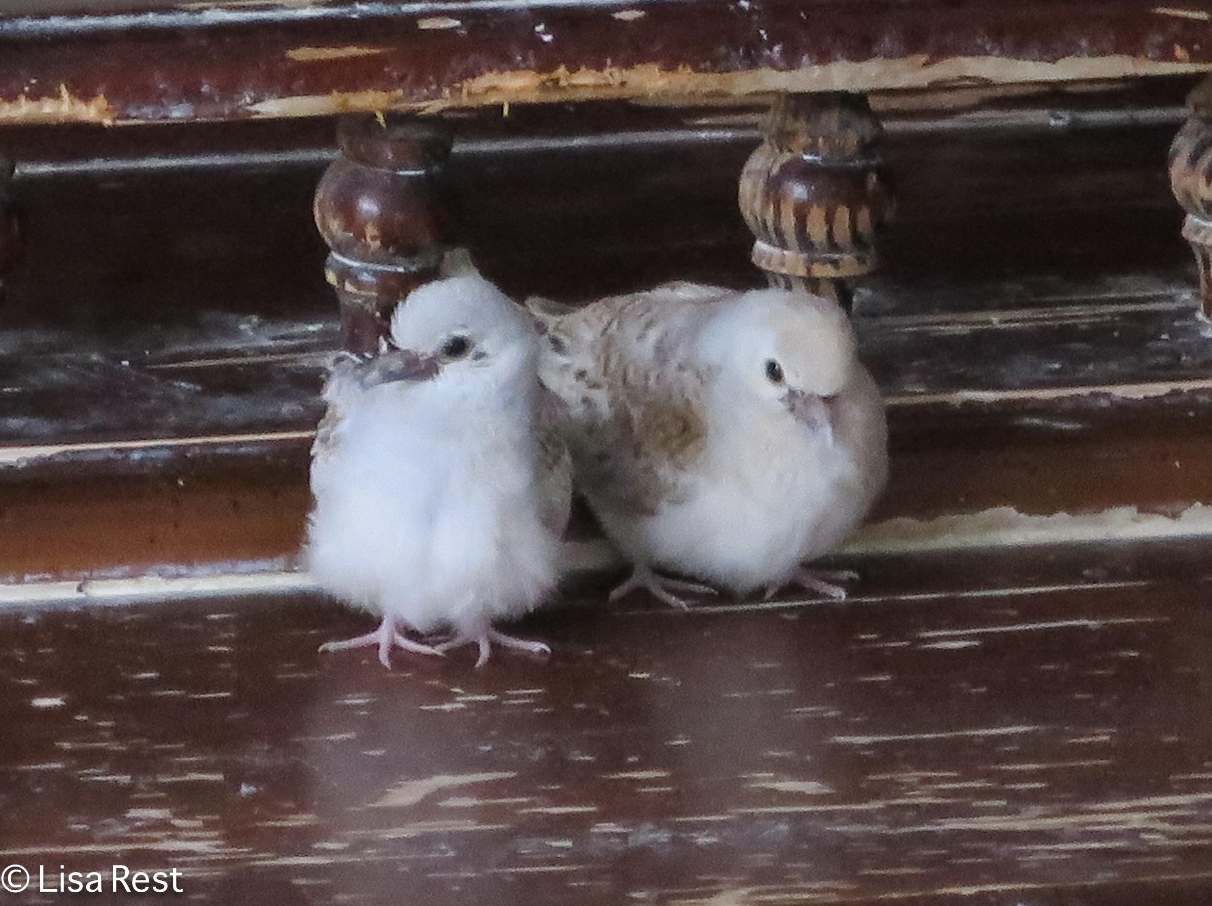 dove-kids-11-26-16-0707