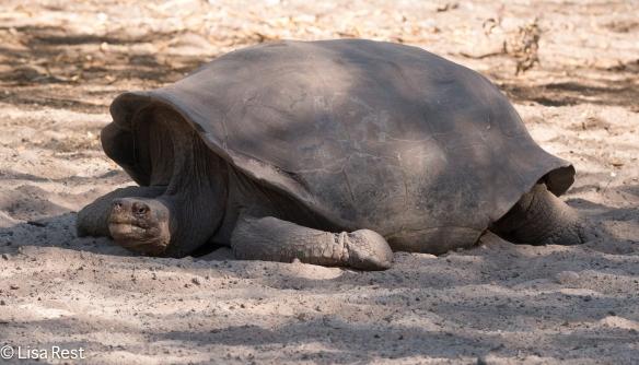 giant-tortoise-07-13-2016-9197