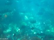 underwater-7-12-16-0237