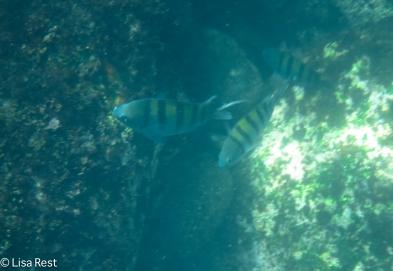 underwater-7-12-16-0239