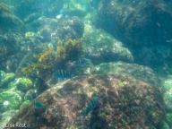 underwater-7-12-16-0243