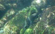 underwater-7-12-16-0248