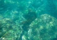 underwater-7-12-16-0260