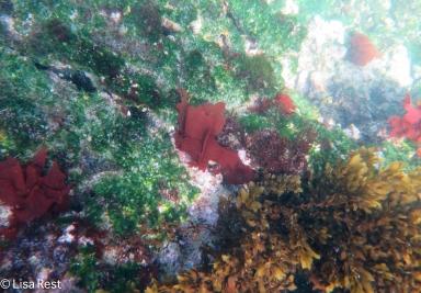 underwater-7-12-16-0276