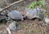 giant-tortoises-07-14-2016-0371
