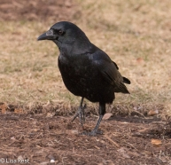 crow-cancer-survivors-2-6-17-7462