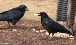crows-cancer-survivors-2-6-17-7451