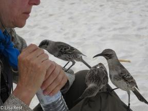 linde-at-gardner-bay-with-mockingbirds-07-16-2016-0520
