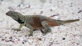 lizard-07-16-2016-7208