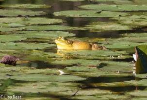 Bullfrog 07-02-17-4672