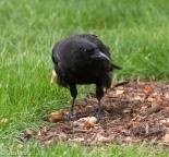 Crow Cancer Survivirs 07-26-17-2224