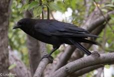 Crow Cancer Survivirs 07-26-17-2235