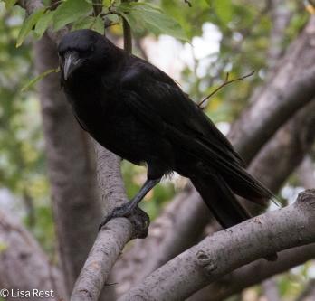 Crow Cancer Survivirs 07-26-17-2240