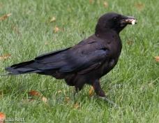Crow Cancer Survivirs 07-26-17-2285