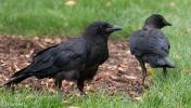 Crows Cancer Survivirs 07-26-17-2265