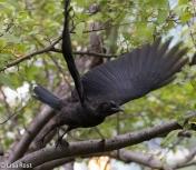 Fledge Crow Cancer Survivirs 07-26-17-2346