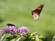 Monarch LSE Park 07-25-17-2189