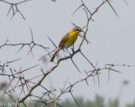 YBCH Goose Lake Prairie 07-03-17-5115