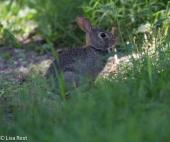 Bunny Portage 07-29-17-6605