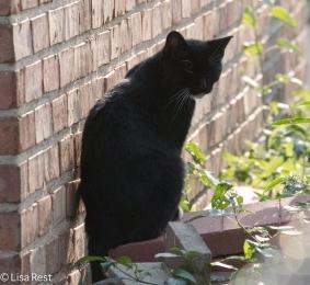 Cat 08-19-17-2991