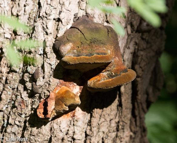 Fungus Portage 07-29-17-6487