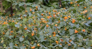 Jewelweed Portage 09-02-17-3778