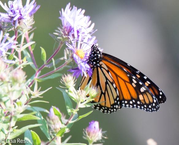 Monarch McGinnis 09-17-17-8326