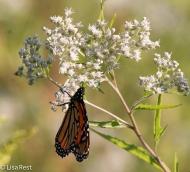 Monarch Portage 09-03-17-4362