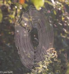 Spider Web Portage 09-03-17-4256