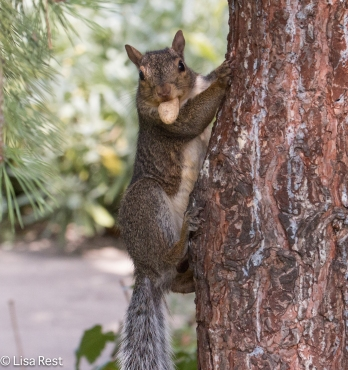 Squirrel Yard 09-01-17-3558