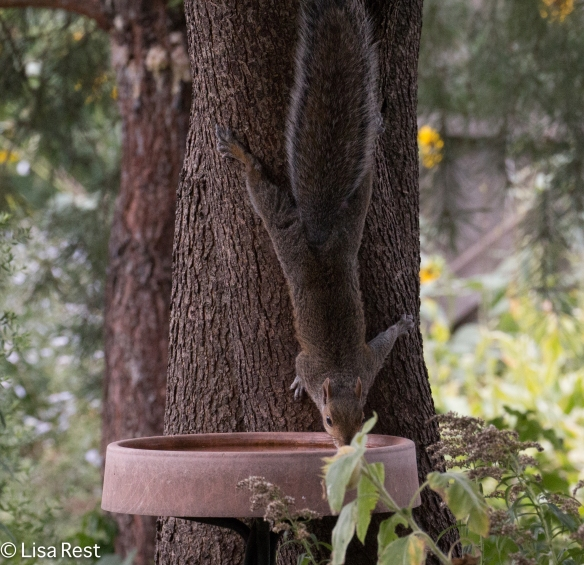 Squirrel Yard 09-02-17-4054