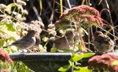 Bird bath 10-29-17-6958