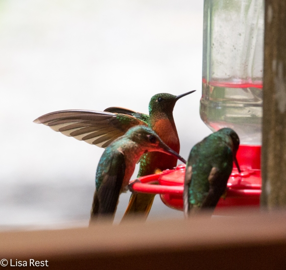 3 Hummers 11-21-17-0473