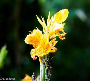 Flower 11-21-17-0493