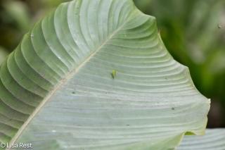 Leaf 11-21-17-0527