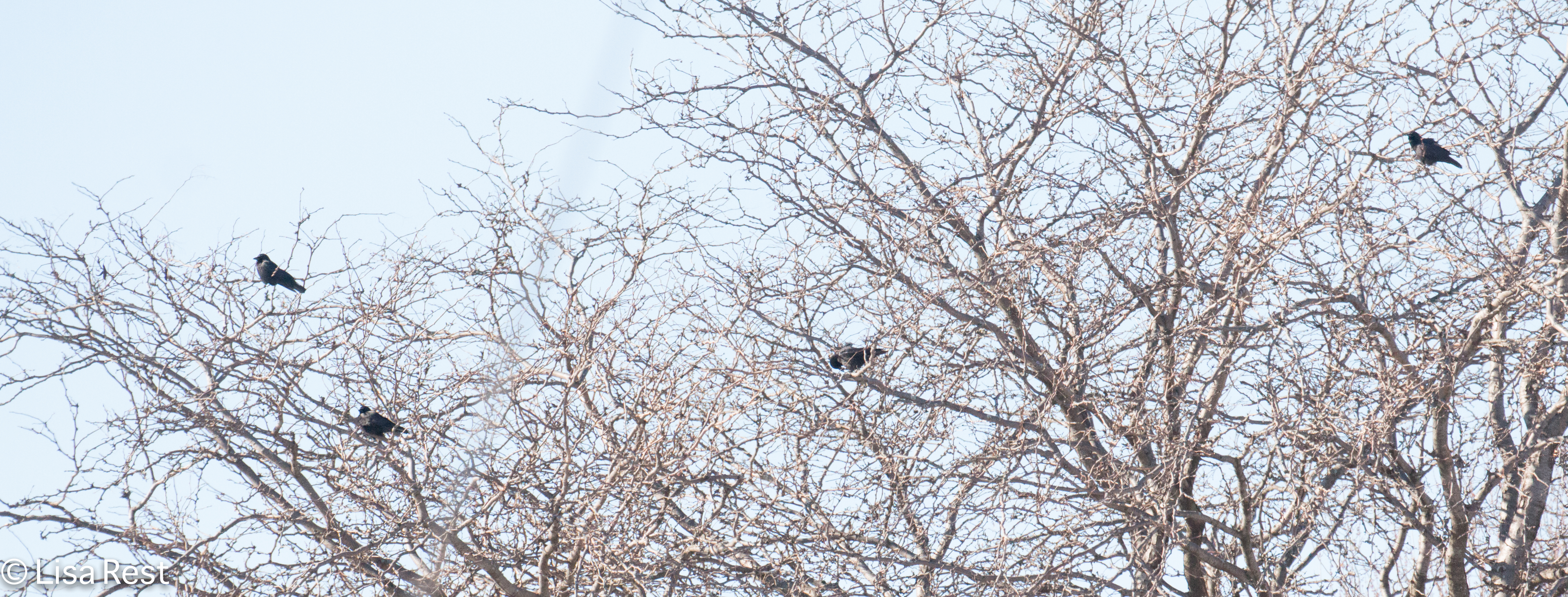 Crows 1-1-18-4012