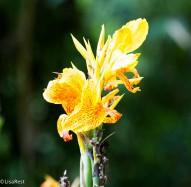 Flower 11-21-2017-0493