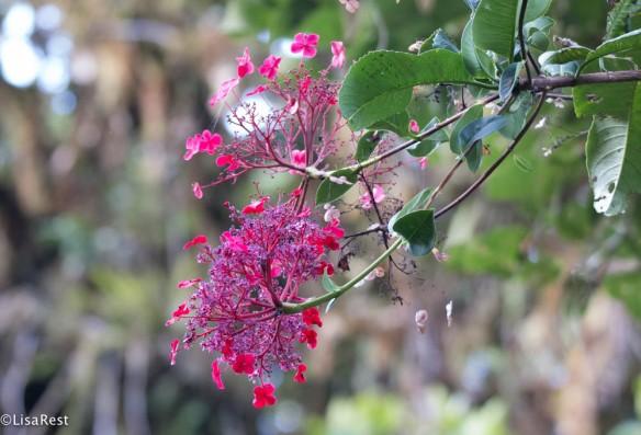 Flowers 11-21-2017-0152