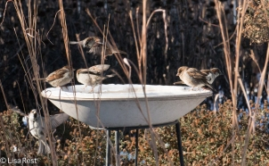 HOSPs at Bird Bath 1-1-18-4004