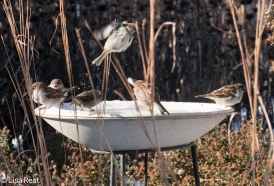 HOSPs at Bird Bath 1-1-18-4006