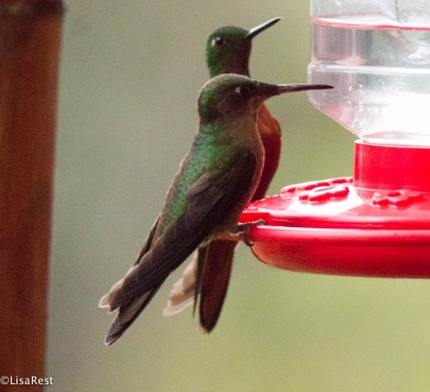 Hummers 11-21-2017-9417