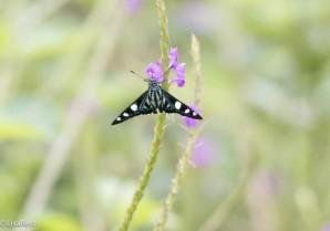 Butterfly 11-24-2017-1794
