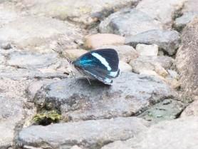 Butterfly 11-24-2017-1865