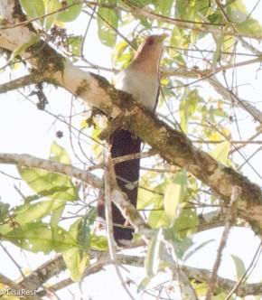 Squirrel Cuckoo 11-22-2017-0287