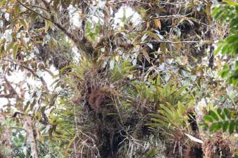 Vegetation 11-23-2017-0623